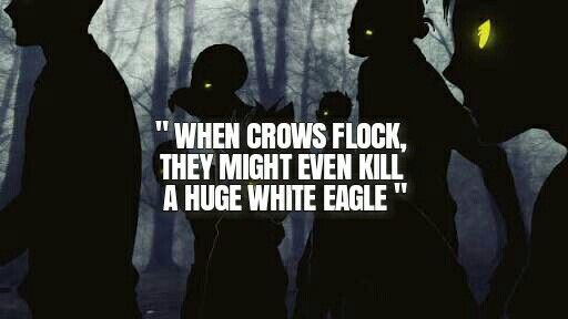 3b6c2f0c02ef When crows flock they might even kill a huge white eagle