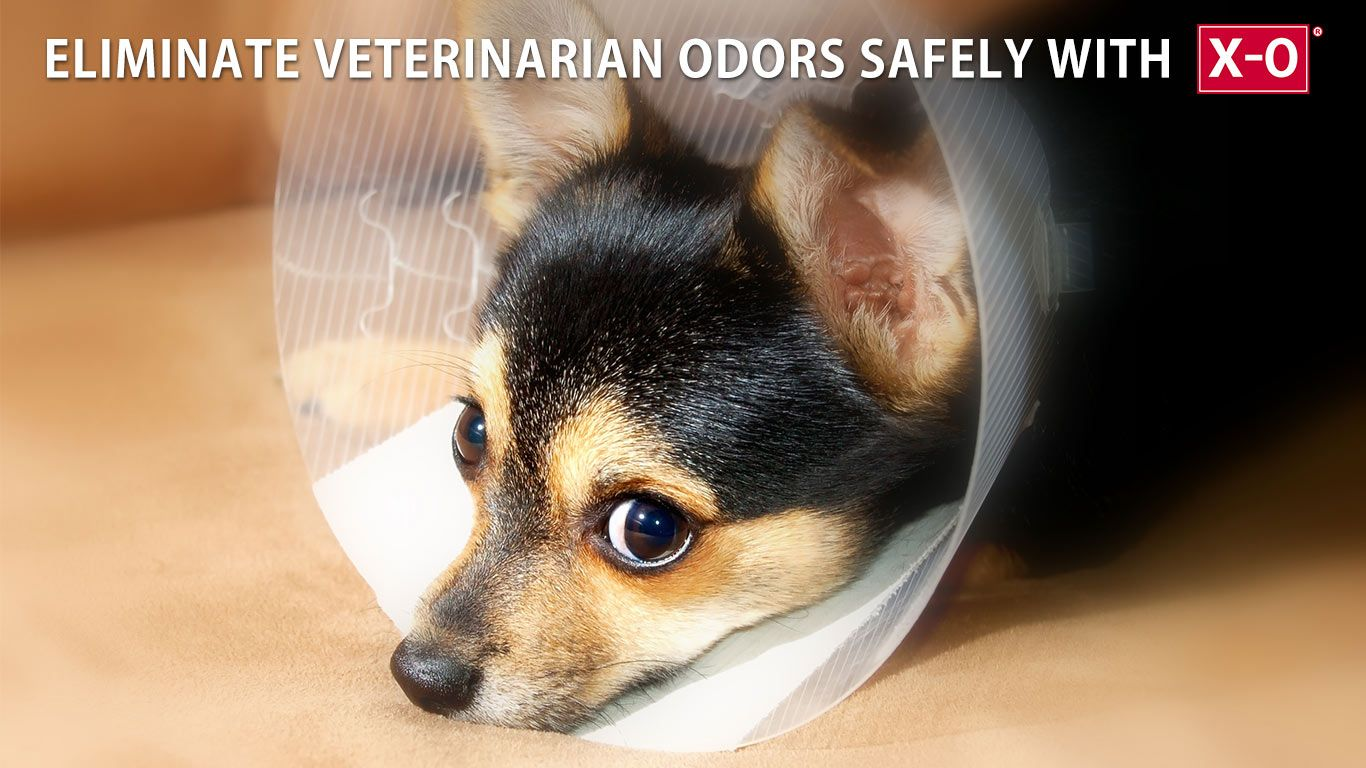 Animal odors are quickly eliminated at veterinary offices