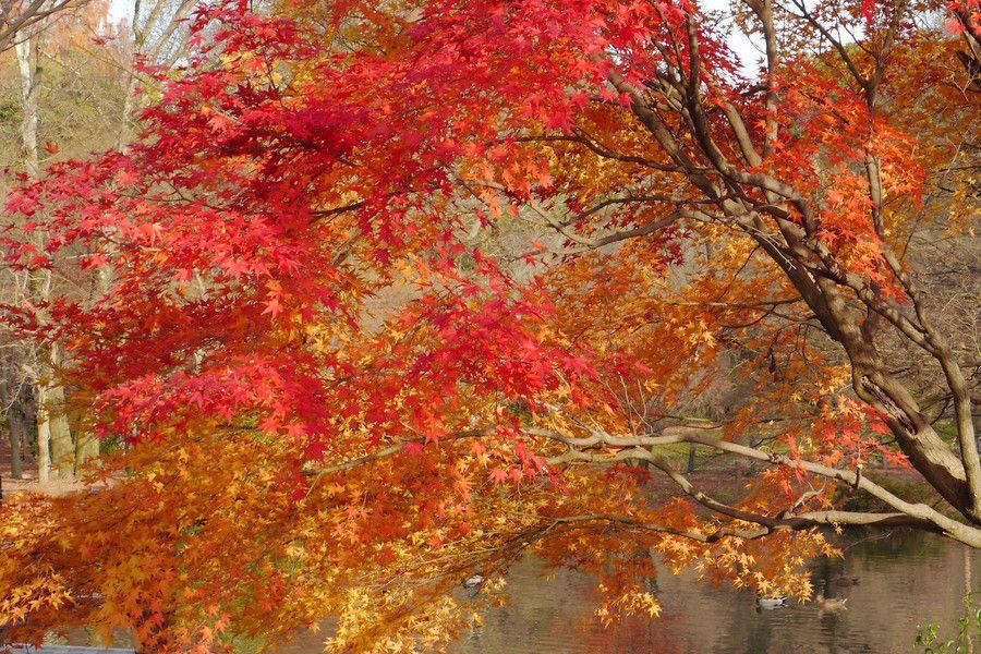 Autumn in Kyoto by Yasutoshi Yamamoto on 500px