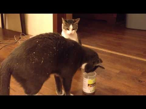 why do cats like catnip youtube today i found out pinterest cat