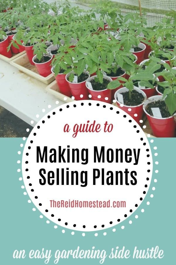 How to Make Money Growing Plants at Home (an easy side hustle!) is part of Easy garden, Plants, Growing plants, Food garden, Plant sale, How to make money - Are you a gardener  Learn how to make money growing plants at home! I'll teach you how to sell plants from your home, and turn your hobby into cash!
