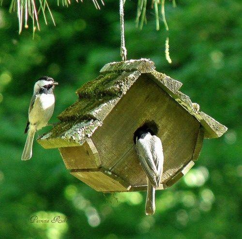 Flower Garden Bird House Simply Beautiful In The Garden