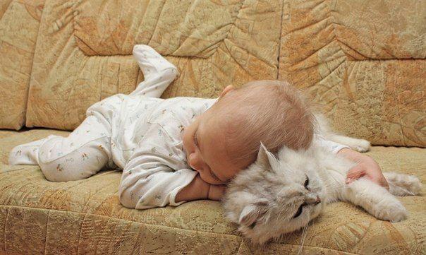 Miteinander Schlafen Baby Katzen Susse Tiere Katzen