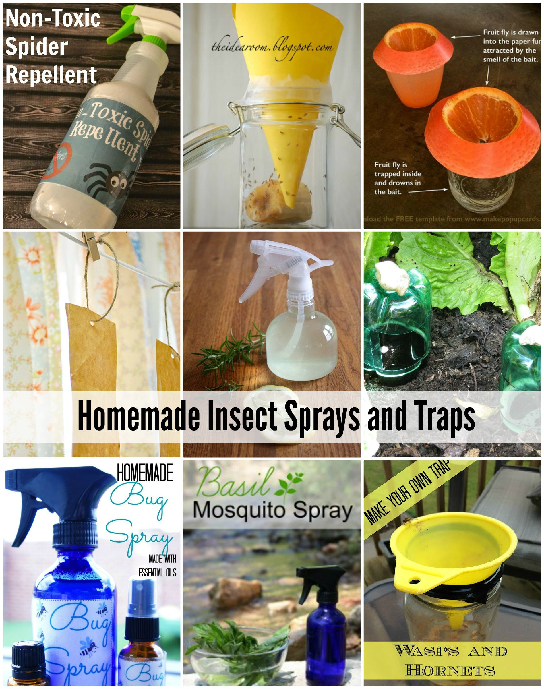 Homemade natural insect sprays and traps insects sprays and homemade