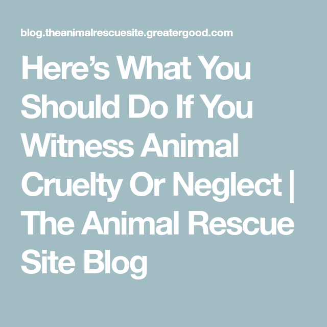 Here's What You Should Do If You Witness Animal Cruelty Or Neglect #animalrescue