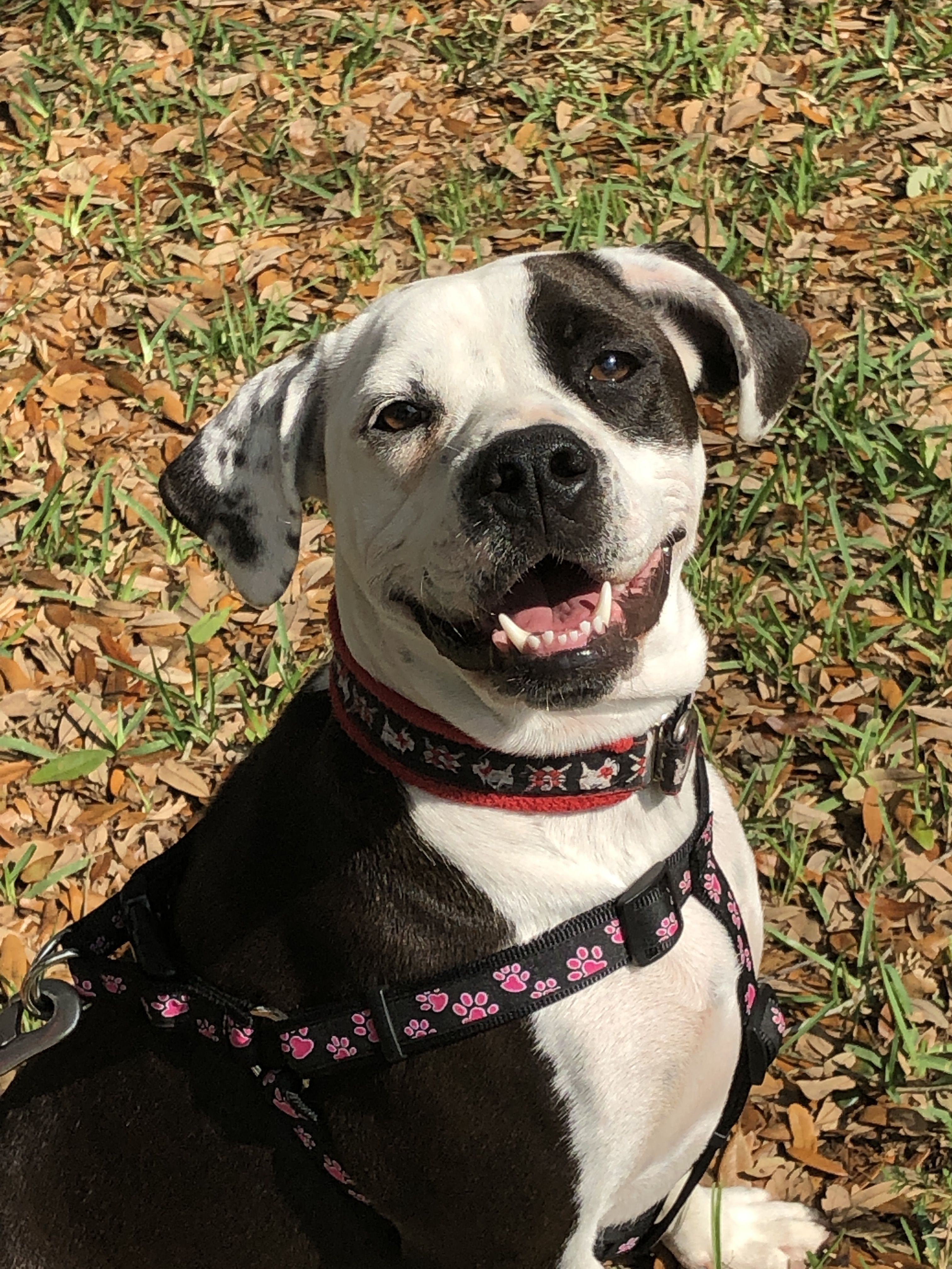 Adopt MARLO— chilled out girl ! on Dog adoption