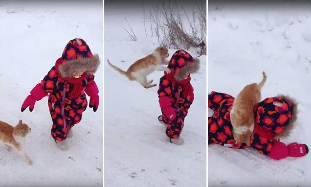 Cat follows toddler through snow then  BODY SLAMS her to the ground