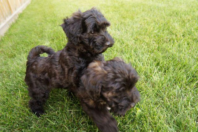 Pin By Jennifer Hubbard On Dog Stuff Dogs Puppies
