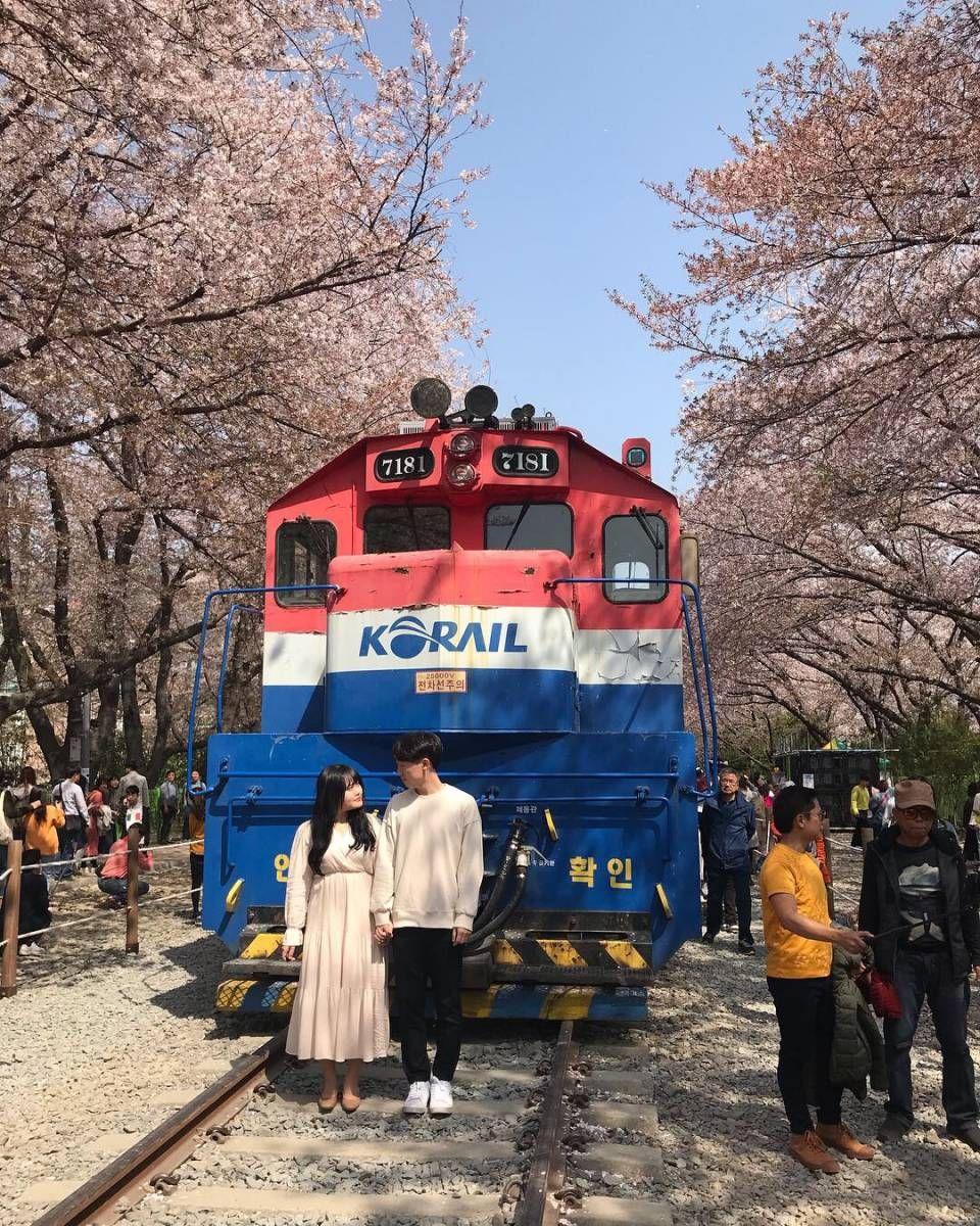 Jinhae Cherry Blossom Festival 2020 One Day Tour From Seoul Busan Daegu Day Tours One Day Tour Cherry Blossom Festival