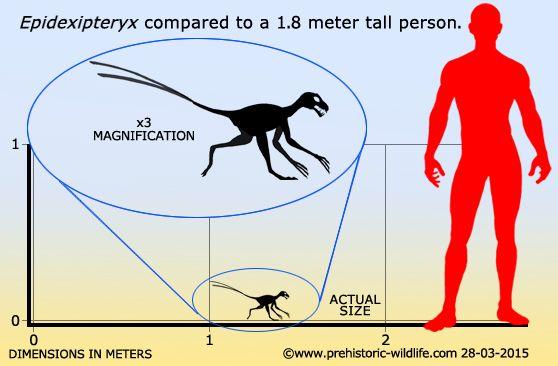 Epidexipteryx Prehistoric Wildlife Prehistoric Animals Prehistoric Creatures