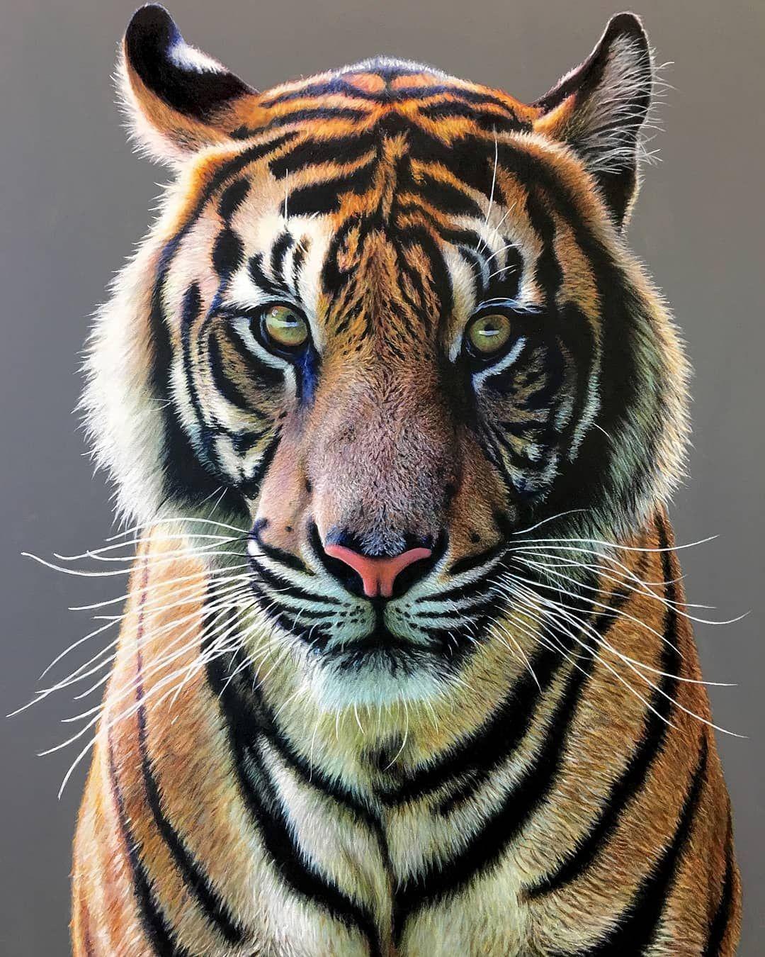 Прикольные рисунки тигров