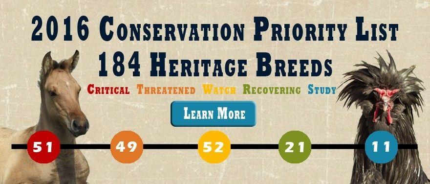 Heritage Breed Livestock...Gulf Coast Native Sheep