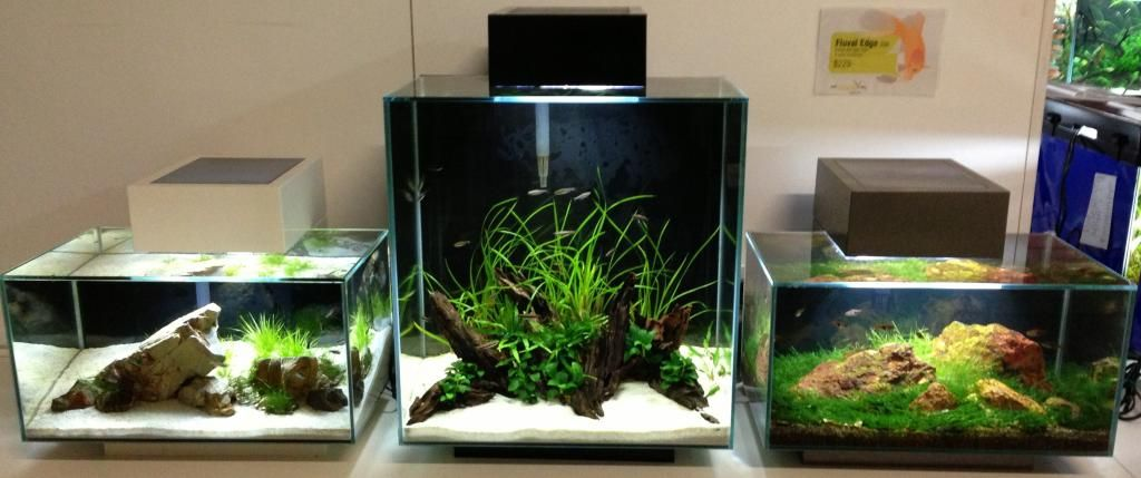Fluval Edge Shop Displays Aquascaping World Forum