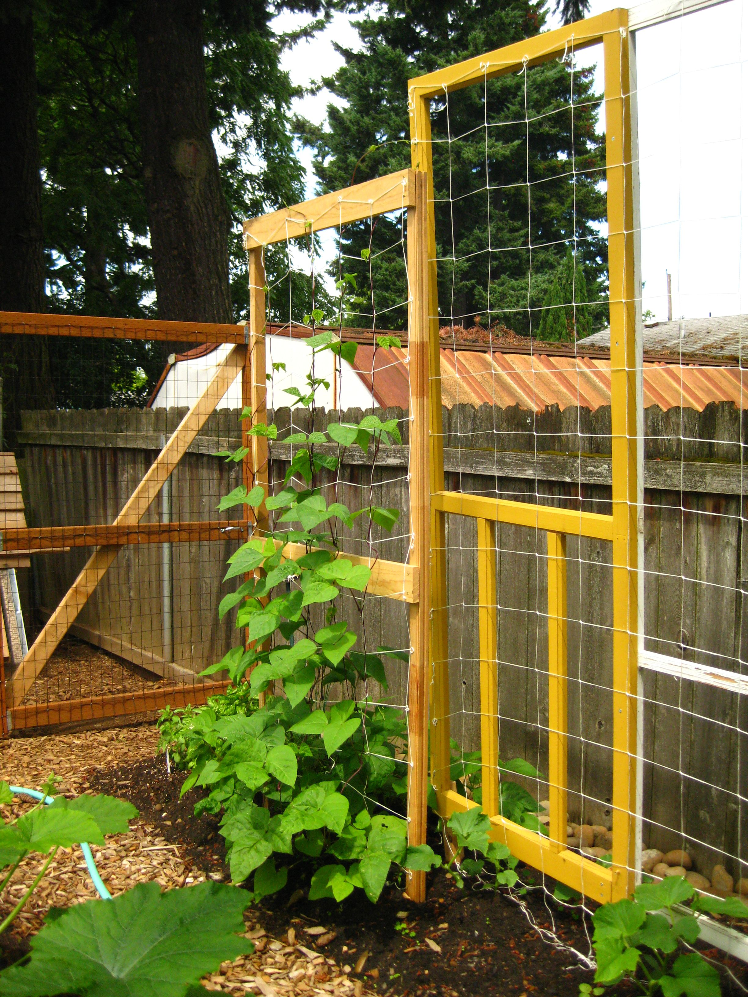 Good Pinterest Trellis Ideas Part - 9: Cool Trellis Idea And I Just Picked Up A Screen Door In The Neighborhood  Trash Pick