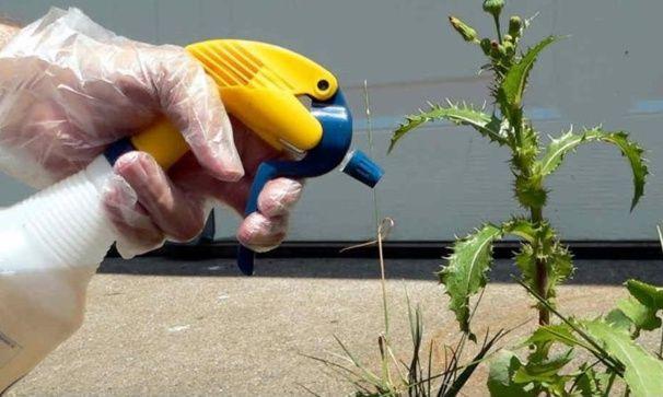 Faire son d sherbant naturel pour le jardin astuce - Desherbant naturel efficace ...