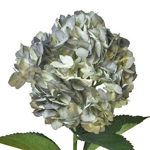 Wedding Flowers Silver Grey Flowers Grey Flowers Flowers Hydrangea Flower