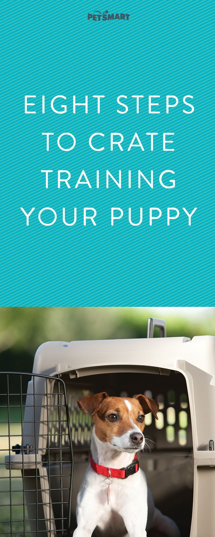 House Training A Puppy Understand Your Pet S Behavior House
