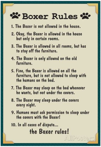 Boxer House Rules Print Boxer Dogs Boxer Boxer Love