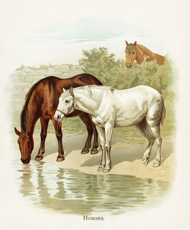 Horses Vintage
