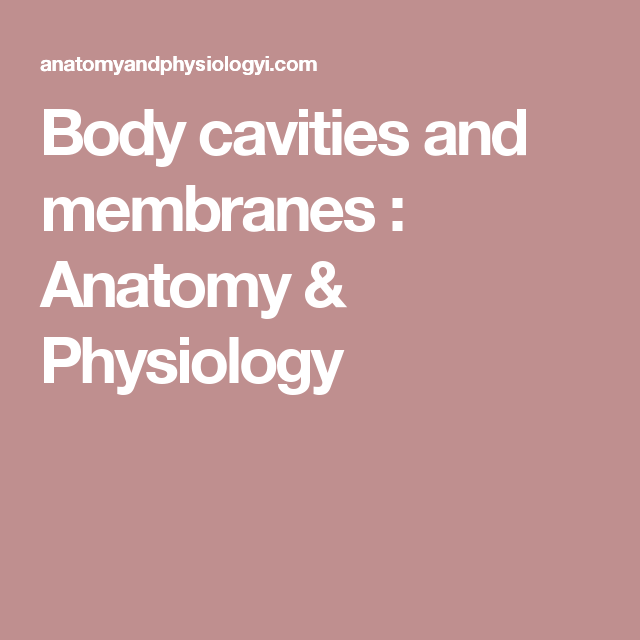 Body cavities and membranes  Anatomy  Physiology  anatomy
