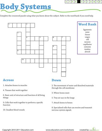 Life Science Crossword Body Systems In 2018 Art Pinterest