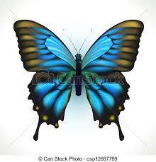 Resultado De Imagen Para Pavo Real Dibujo Realista Mariposa Azul Dibujo Realista Ilustracion De Mariposa