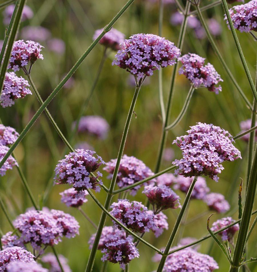 33 Blumensorten für den Bauerngarten | Bauerngarten anlegen ...