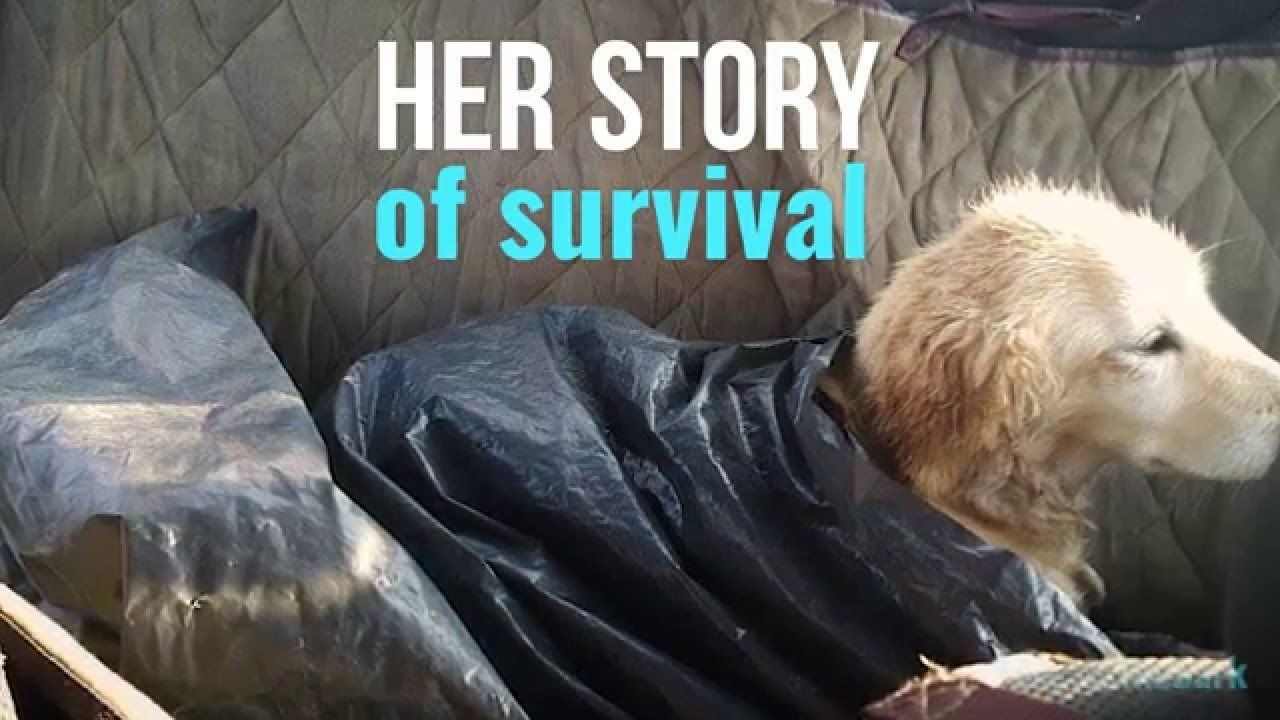 Chi Chi S Stand A Survival Story People S Friend Animals