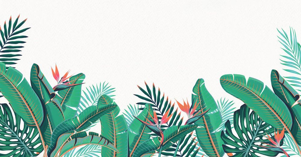 Aesthetic Plant Wallpaper Laptop