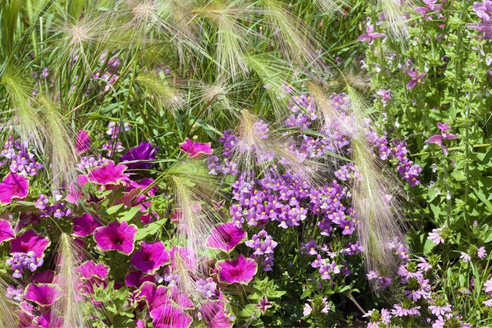 Elfenspiegel Blumenbeet Pinterest Garten Pflanzen Und Gartnern