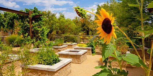8c9bad59e050369470b875eea0078e8c - The Gardens At The Las Vegas Springs Preserve