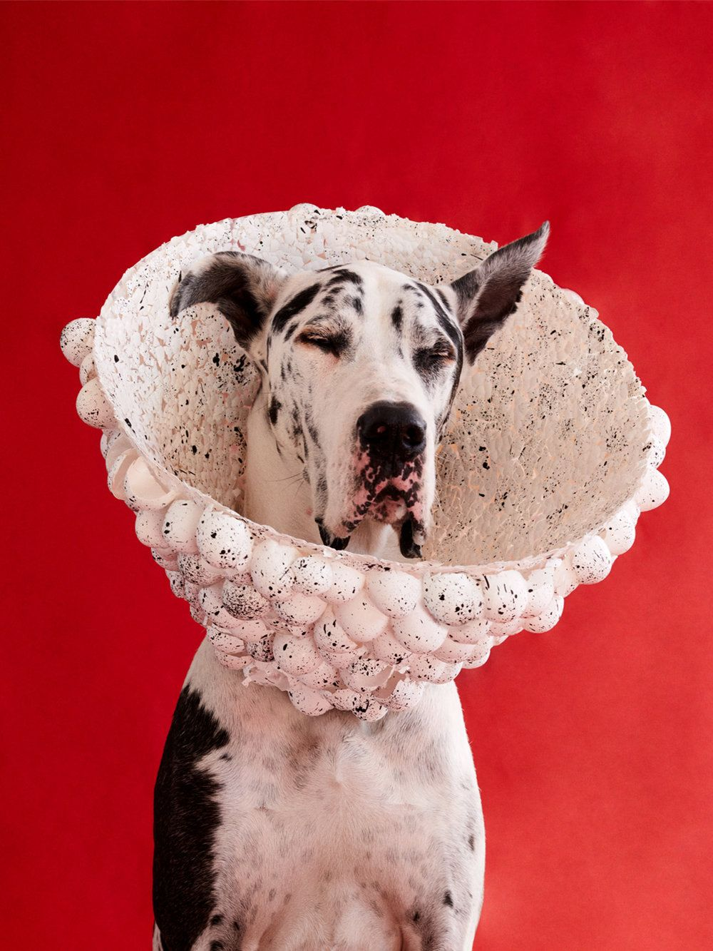 Photographer Winnie Au Captures The Unique Personalities Of Dogs Adorned In Sculptural Cones Of Shame Cone Of Shame Dog Cone Loose Idea