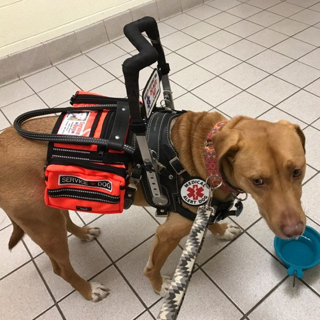 Adele Espy Added A Photo Of Their Purchase Service Dogs Gear