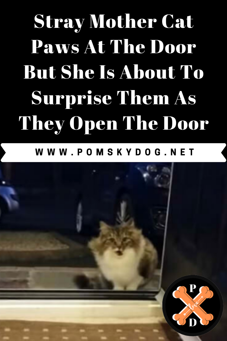 Stray Mother Cat Paws At The Door But She Is About To Surprise Them As They Open The Door Pomskydog Cat Paws Mother Cat Cats