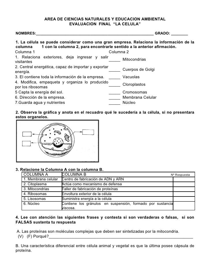 AREA DE CIENCIAS NATURALES Y EDUCACION AMBIENTAL EVALUACION FINAL ...