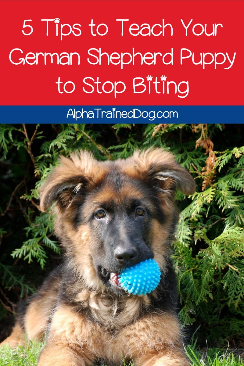 How Do You Get A German Shepherd To Stop Biting While Teething