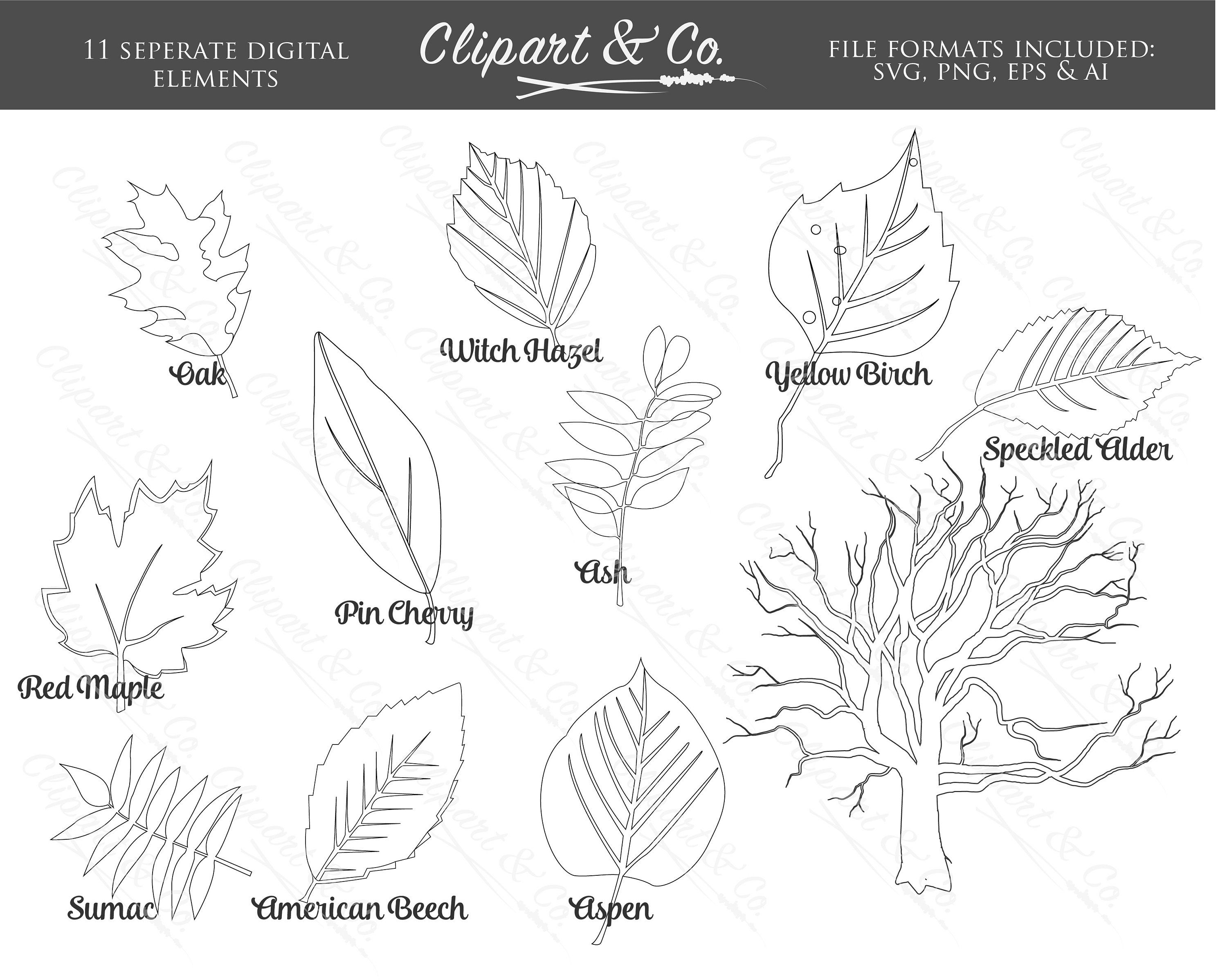 Outline Fall Leaf Clipart And Tree Clip Art Digital Stamps