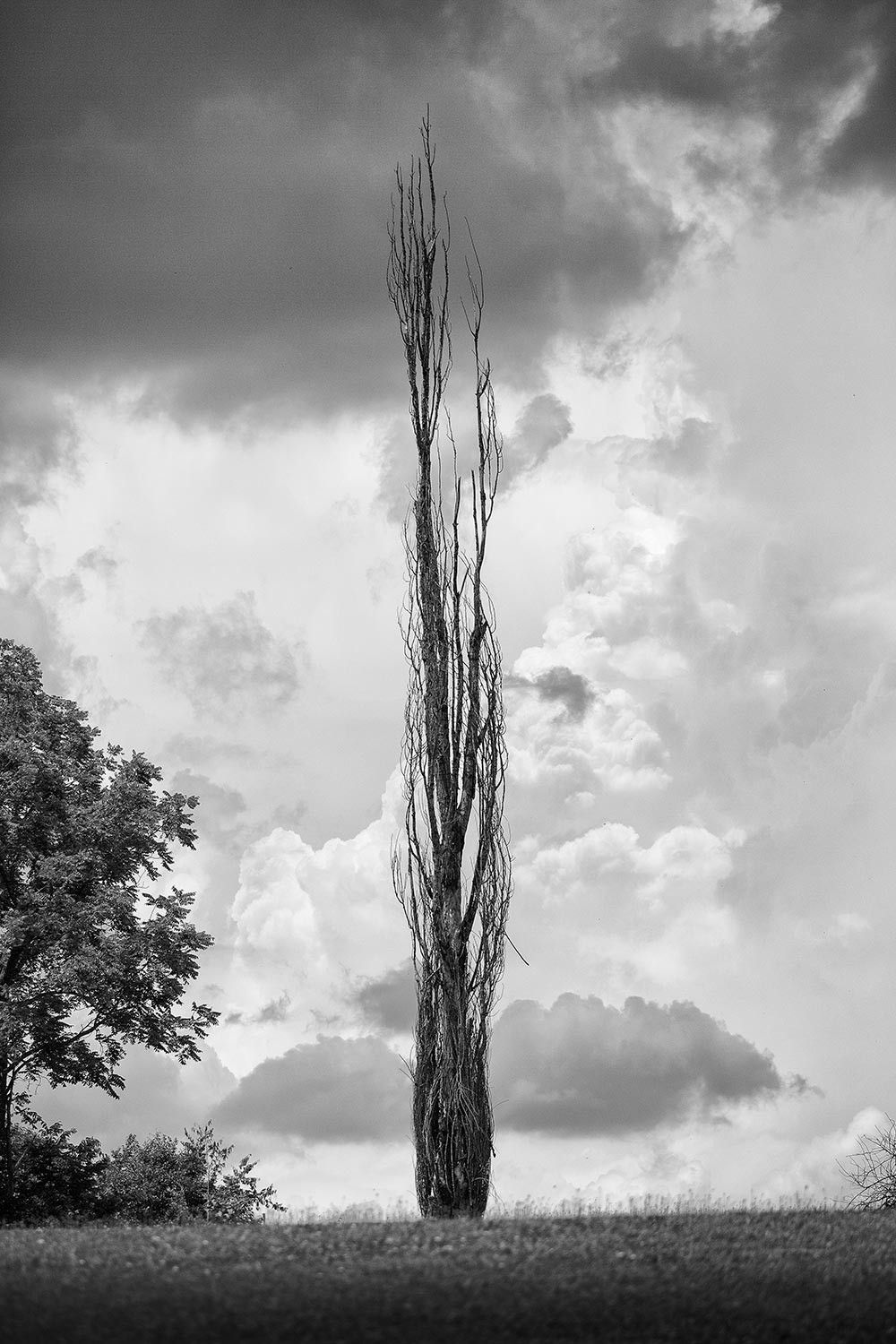 Tall Tree And Stormy Sky Landscape Photograph A0020178 Landscape Photography Landscape Photography Tutorial Landscape
