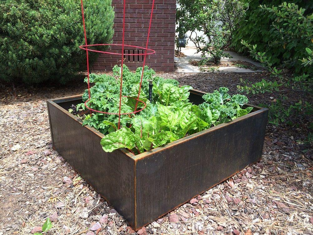 Growing vegetables in corten steel planter beds raised for Raised vegetable garden beds