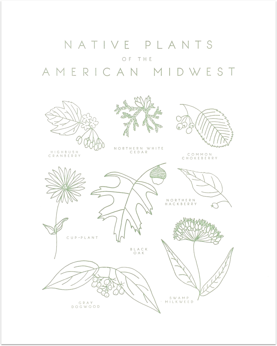 Native Plants of the American Midwest  by Taiga Press - Decovo