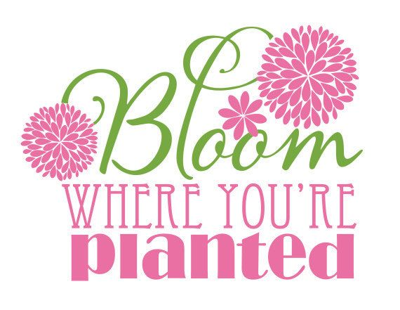 Bloom Where You Re Planted Reminder Bloom Where You Are Planted Bloom Where Youre Planted Bloom
