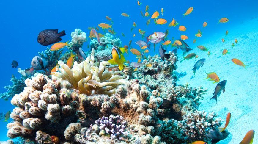 Le Vele Resort Grace Bay Beach Turks and Caicos Islands