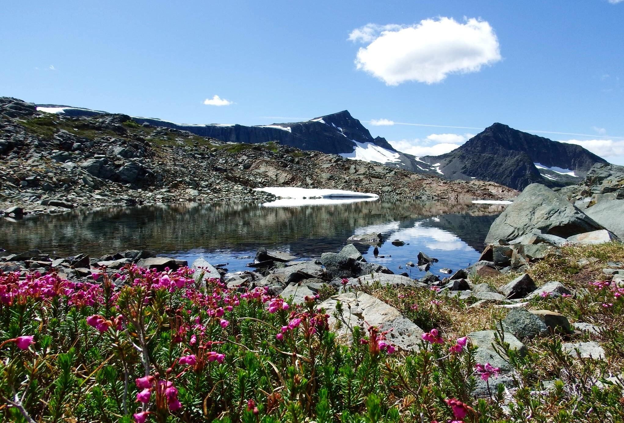 Alpine Tarn And Wildflowers On The Way To Mt Albert Edward