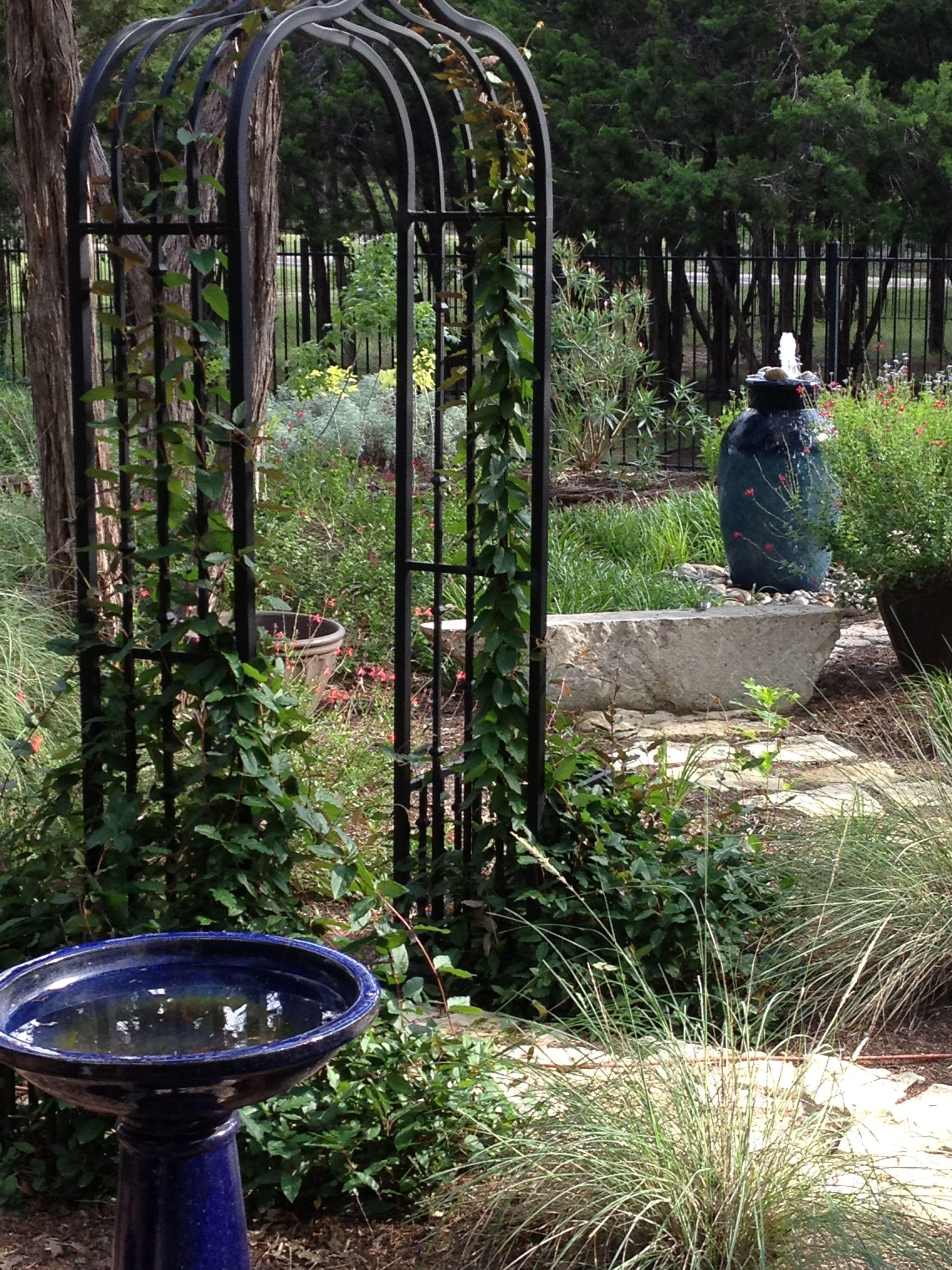 Backyard enjoyment in Austin, TX ..yard by hubby ...