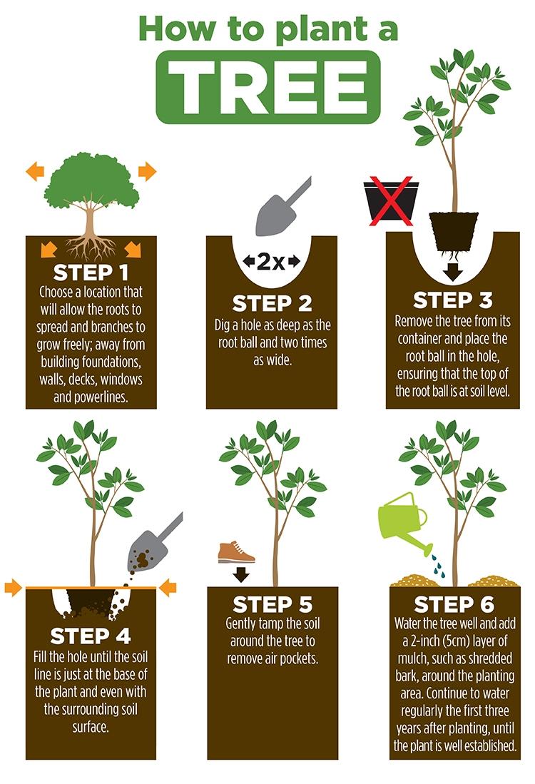 Christmas Tree Manual Guide
