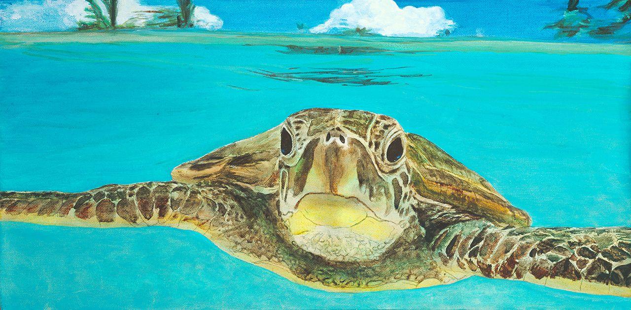 x acrylic hello honu buddhaus turtle pinterest