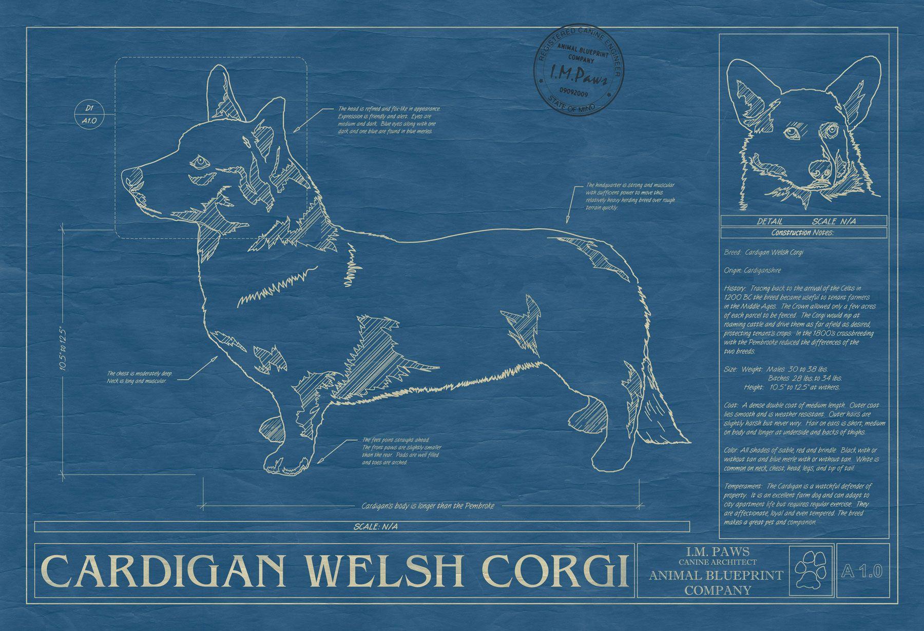 Cardigan Welsh Corgi Series Blue Merle Canvas Print