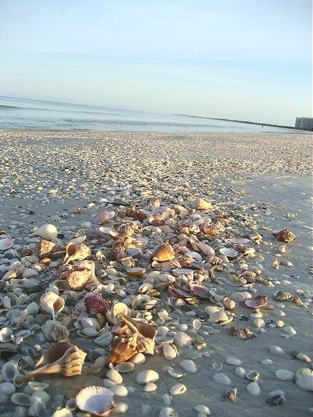 Shelling In Marco Island Nothing Like It