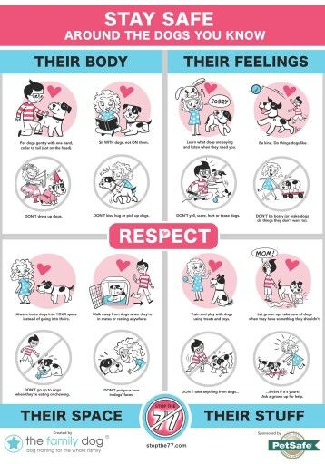 Great Chart For Teaching Children How To Respect Dogs Dog Bite