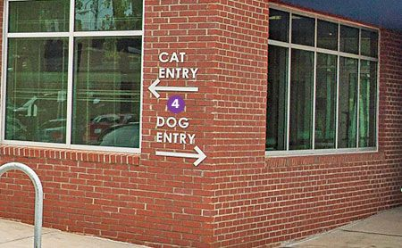 Fear Free Design Ideas For Any Veterinary Practice Pet Clinic